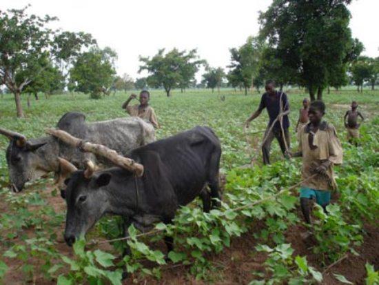 Các nước châu Phi muốn thoát nghèo, họ cần thúc đẩy nông nghiệp bằng cách sử dụng công nghệ sinh học để làm cho nông nghiệp thay da đổi thịt.