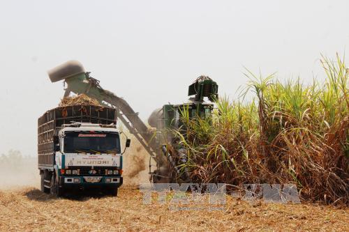 Việt Nam dự Hội nghị FAO lần thứ 33 khu vực châu Á-Thái Bình Dương