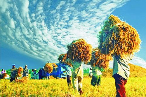 Biến đổi khí hậu đe dọa đến an ninh lương thực của Việt Nam