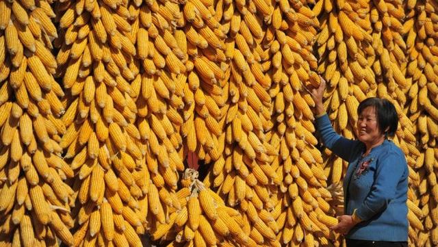 Trung Quốc và cơn bão thực phẩm biến đổi gen