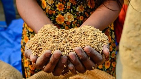 Ngày Lương thực thế giới 2017: An ninh lương thực, nông thôn và di cư