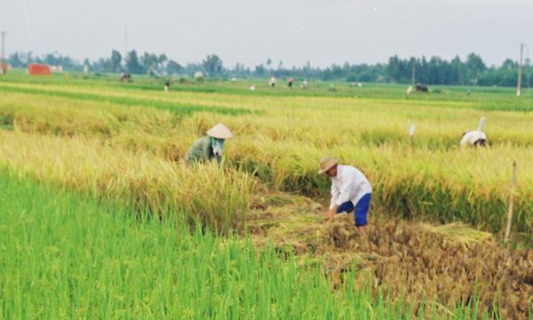 Bảo đảm an ninh lương thực và phát triển nông thôn