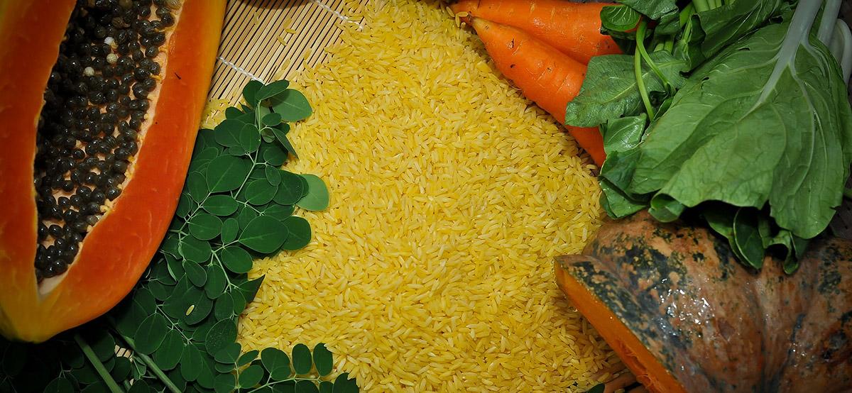 Úc – Newzealand chính thức phê duyệt sử dụng Gạo vàng làm thực phẩm